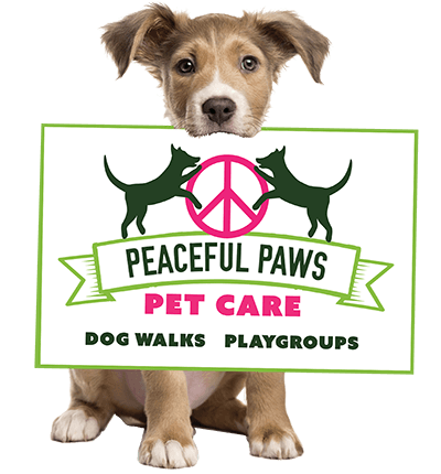 Peaceful Paws Pet Care | Dog Walking, Hiking, Pet Sitting