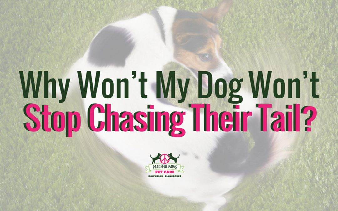 Why Won't My Dog Stop Chasing Their Tail?