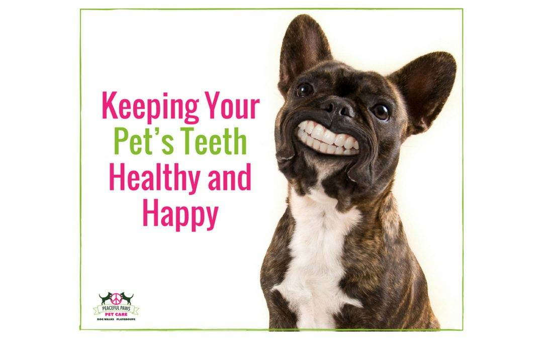 Keeping Your Pet's Teeth Healthy and Happy