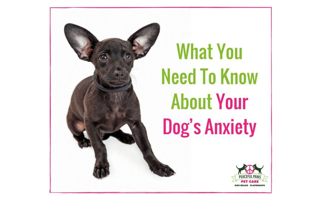What You Need To Know About Your Dog's Anxiety