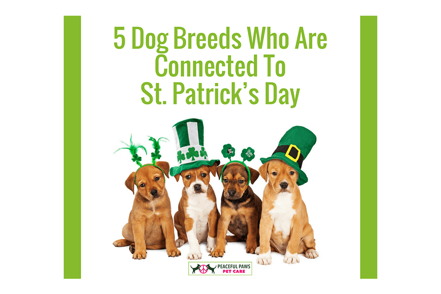 5 Dog Breeds Who Are Connected To St. Patrick's Day
