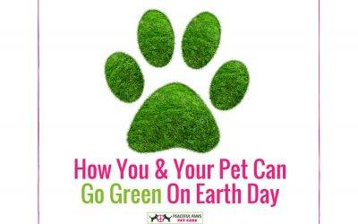 How You & Your Pet Can Go Green On Earth Day