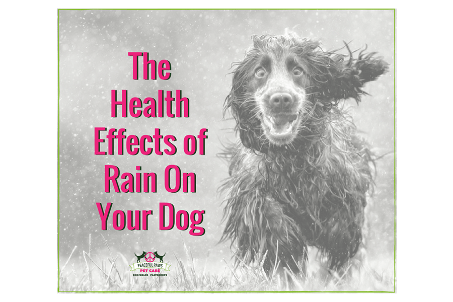 The Health Effects of Rain On Your Dog