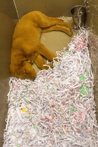 Notice these puppies are required to lay on shredded paper or a cold metal floor