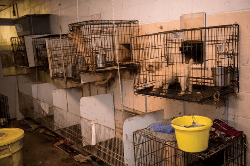 Dogs were found in small cages during the raid on Patricia Yates' puppy mill in Cabarrus County, North Carolina. Meredith Lee