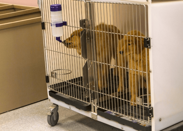two large breed puppies crammed into a wire cage with a gerbil water bottle