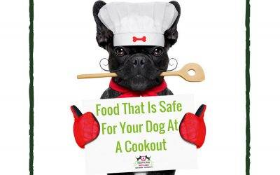 Food That Is Safe For Your Dog At A Cookout