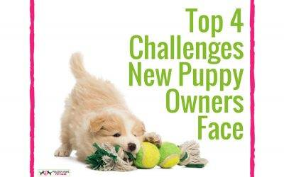 Top 4 Challenges New Puppy Owners Face