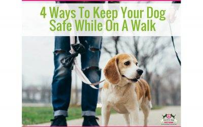 Top 4 Ways To Keep Your Dog Safe When On A Walk