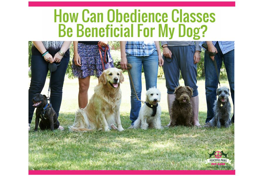How Can Obedience Classes Be Beneficial For My Dog?