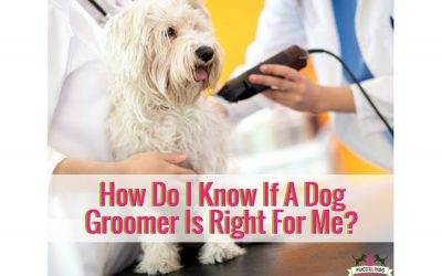 How Do I Know If A Dog Groomer Is Right For Me