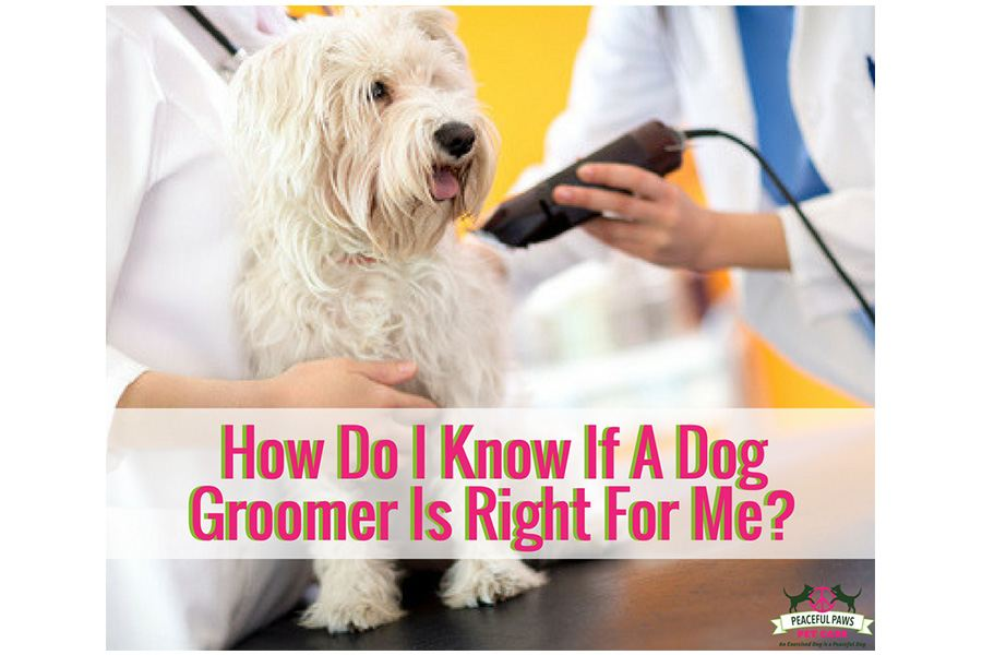 How Do I Know If A Dog Groomer Is Right For Me?