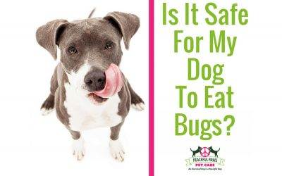 Is It Safe For My Dog To Eat Bugs?