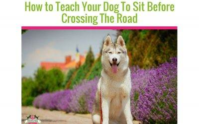 How To Teach Your Dog To Sit Before Crossing The Road