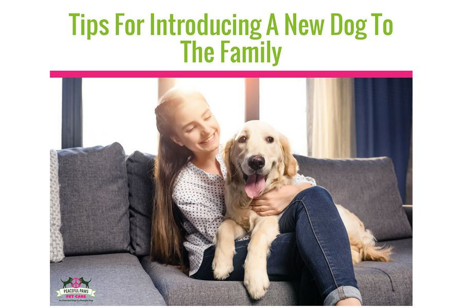 Tips For Introducing A New Dog To The Family