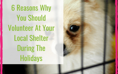 6 Reasons Why You Should Volunteer At Your Local Shelter During The Holidays