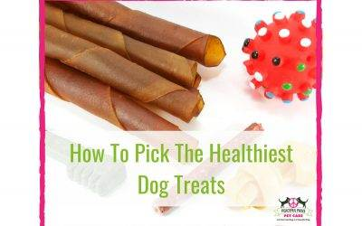 How To Pick The Healthiest Dog Treats