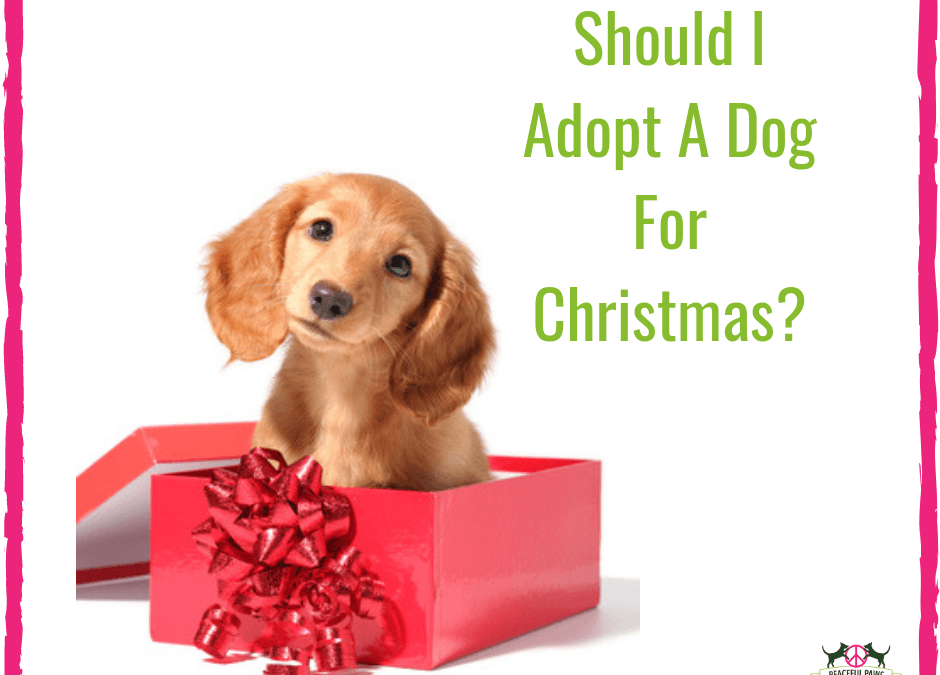 Should I Adopt A Dog For Christmas