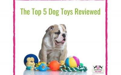 The Top 5 Dog Toys Reviewed