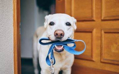 5 Tips for Keeping Your Dog Busy