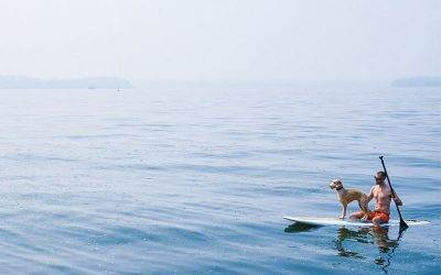 Dogs in Action. Stand Up Paddle board with your pup?
