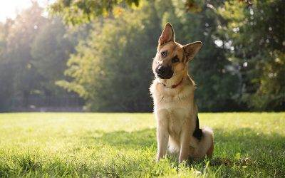 Did You Know? Canine skills and traits you may not have known until now...