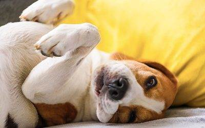 When You Can't Get Fido Out – Tips & Tools